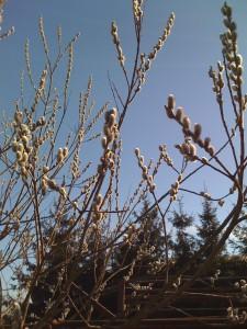 Der Frühling kommt (1)